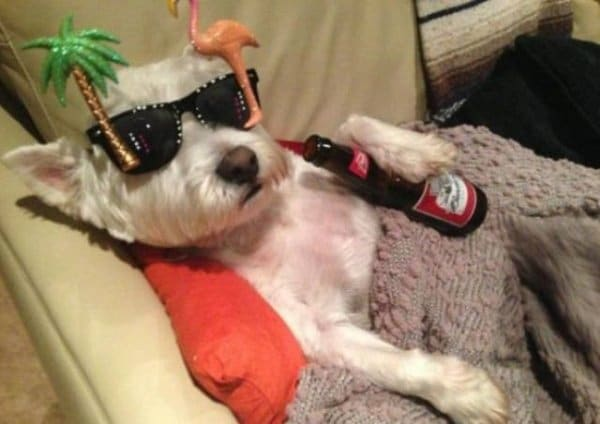 собака в очках и с бутылкой