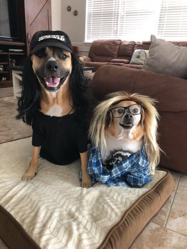 собаки в париках