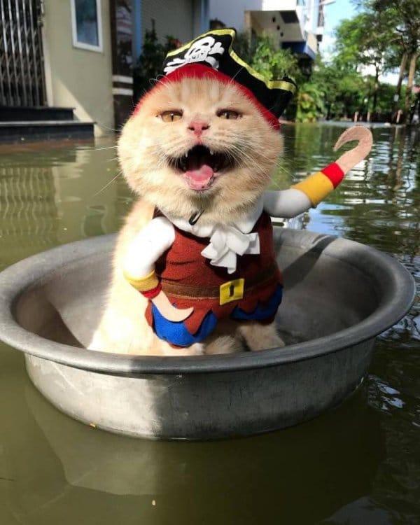 рыжий кот в костюме капитана крюка