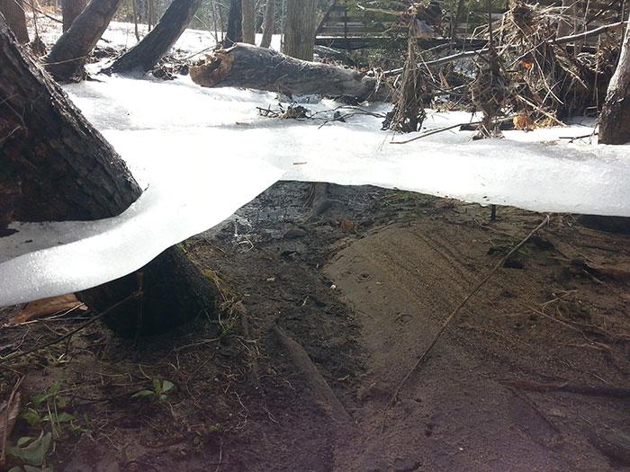 лед в лесу