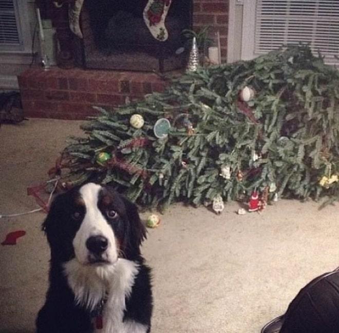 собака перевернула елку