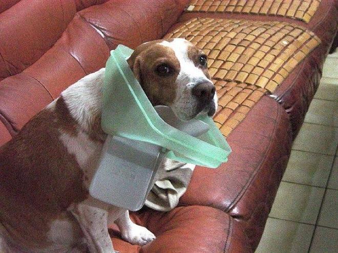 собака с крышкой от мусорного ведра на шее