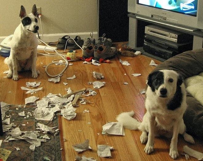 собаки в комнате с разорванной бумагой