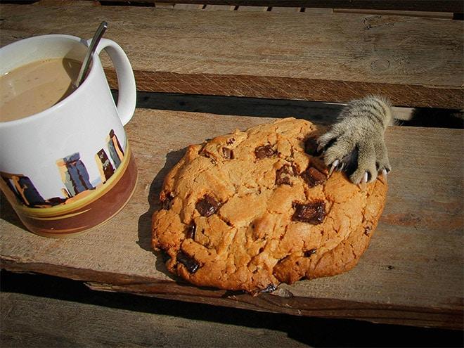 кошачья лапа и печенье
