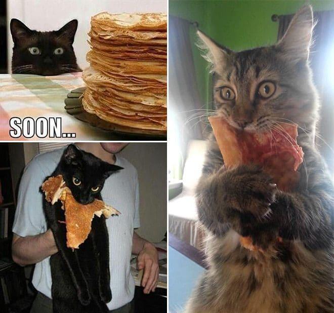 коты с едой