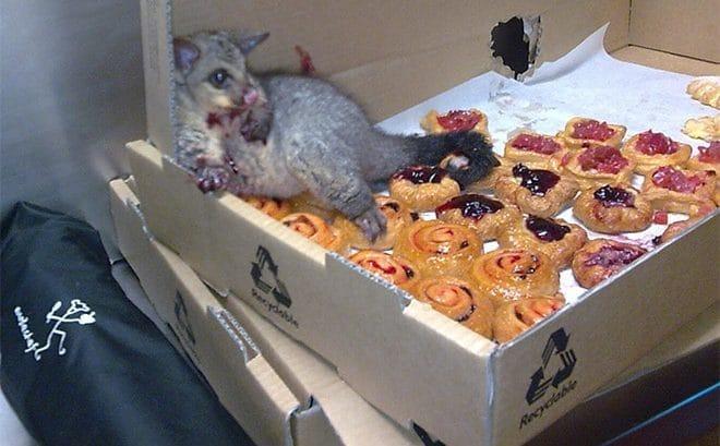 животное с печеньем