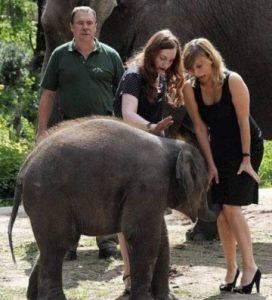 слоненок и женщины