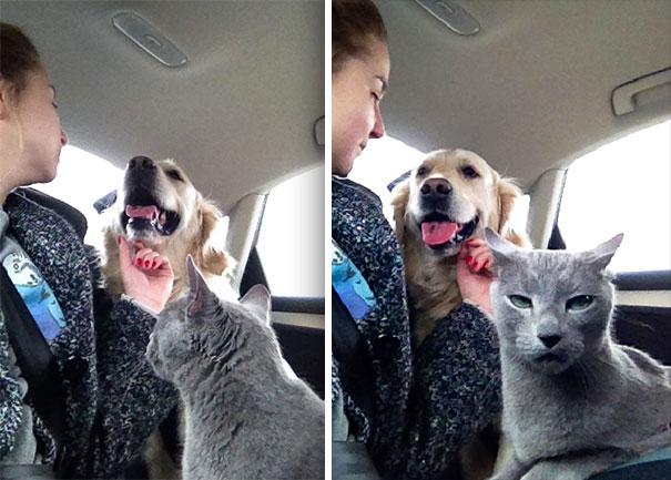 девушка с котом и собакой в машине