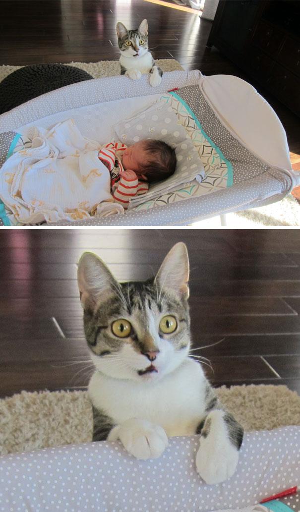 кот рядом с новорожденным