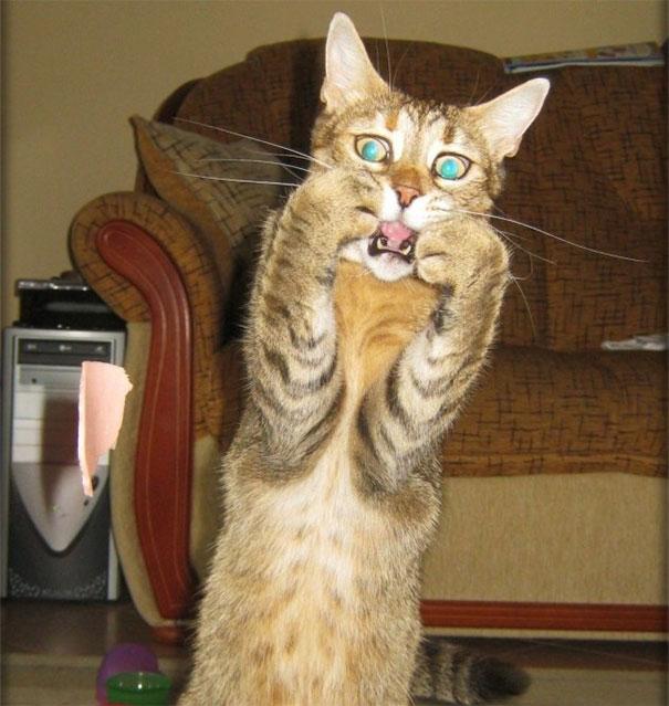 полосатый кот боится