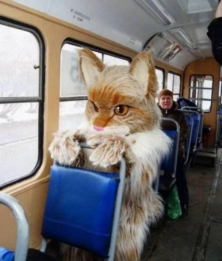 человек в костюме кота в автобусе