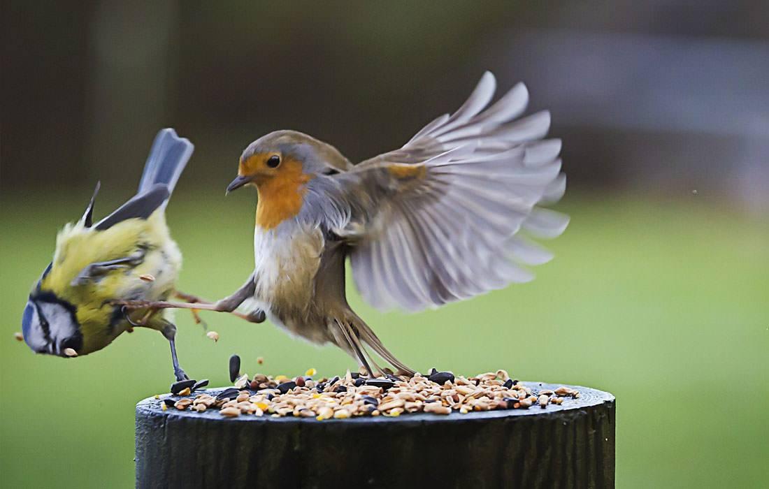 Птица картинка прикол