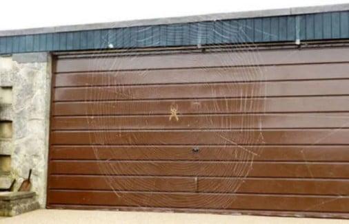 паутина на гараже