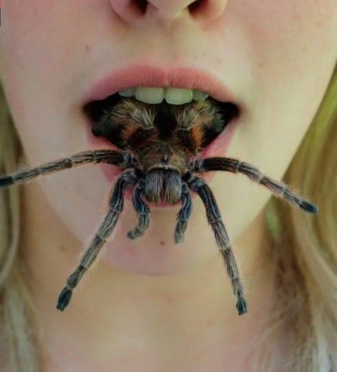 паук во рту у девушки