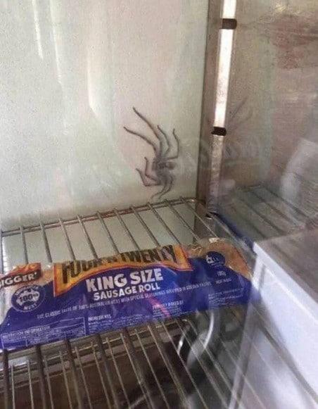 паук в холодильнике