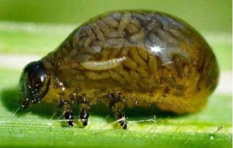 насекомое на листве