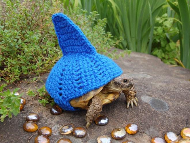 Какая милота! 12 весёлых фотографий черепах в вязаных костюмах...)