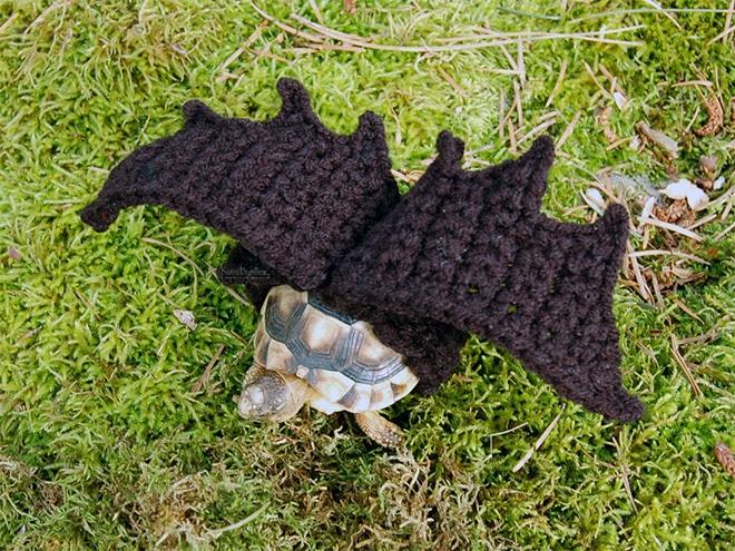 Какая милота! 12 весёлых фотографий черепах в вязаных костюмах...) рис 9