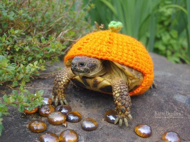 черепаха в костюме тыквы