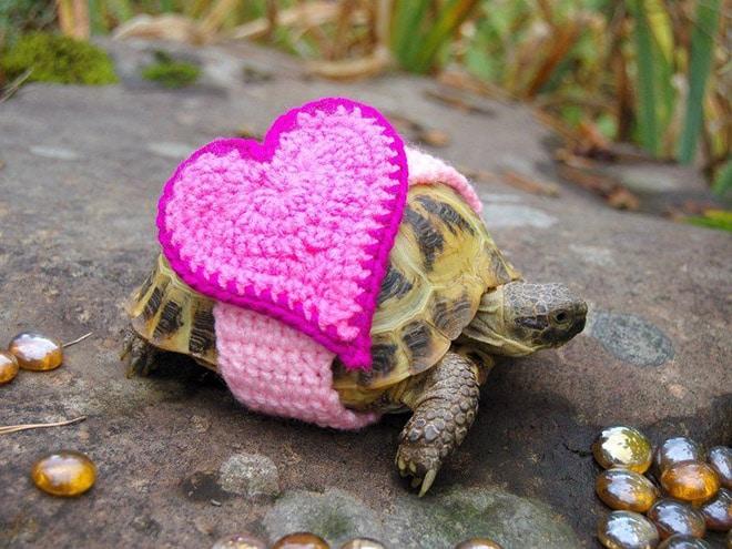 Какая милота! 12 весёлых фотографий черепах в вязаных костюмах...) рис 10