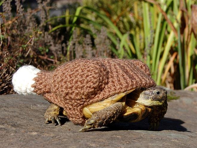 Какая милота! 12 весёлых фотографий черепах в вязаных костюмах...) рис 11