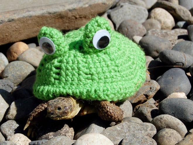 Какая милота! 12 весёлых фотографий черепах в вязаных костюмах...) рис 12