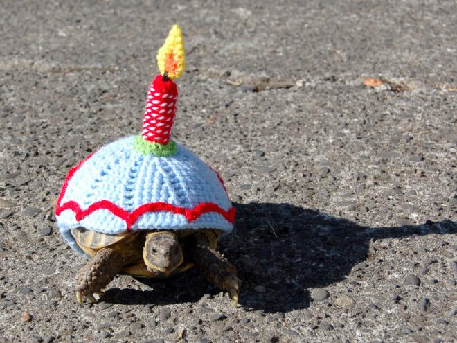 черепаха в костюме торта