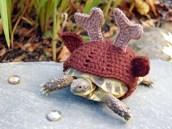Какая милота! 12 весёлых фотографий черепах в вязаных костюмах...) рис 2