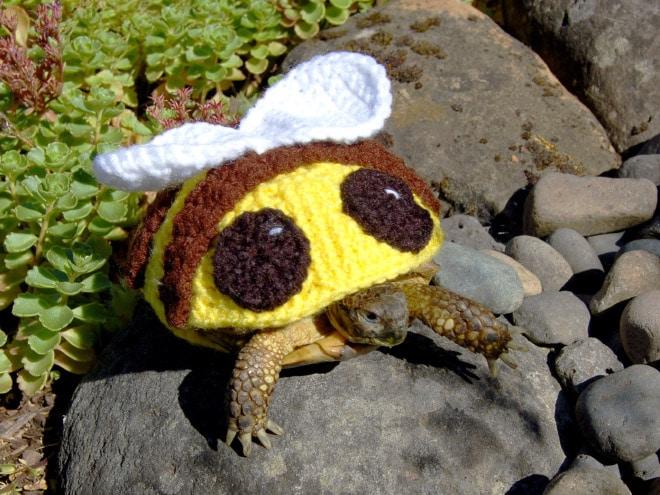 черепаха в костюме пчелы