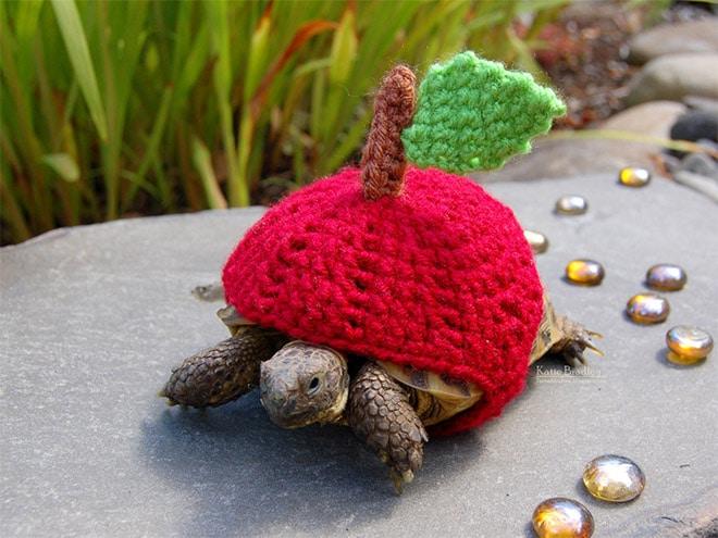 Какая милота! 12 весёлых фотографий черепах в вязаных костюмах...) рис 4
