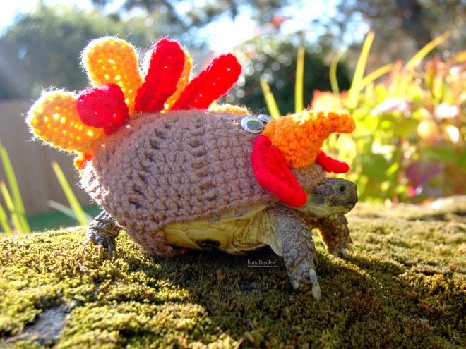 Какая милота! 12 весёлых фотографий черепах в вязаных костюмах...) рис 5