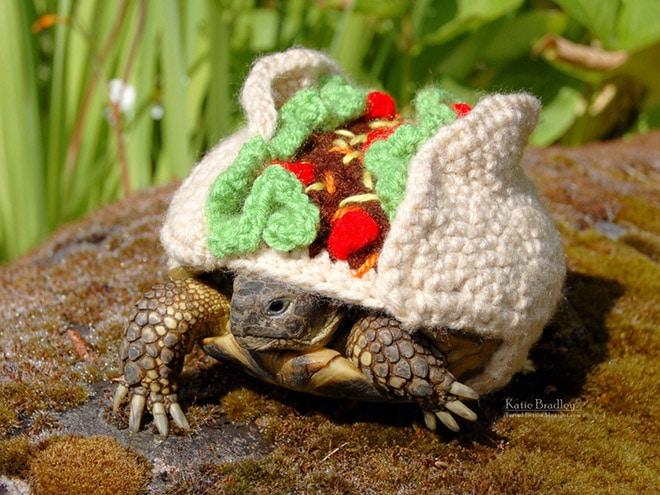 Какая милота! 12 весёлых фотографий черепах в вязаных костюмах...) рис 6