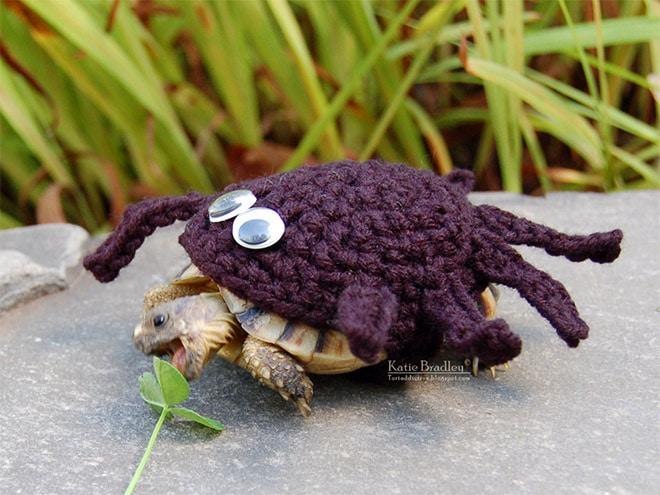 Какая милота! 12 весёлых фотографий черепах в вязаных костюмах...) рис 7