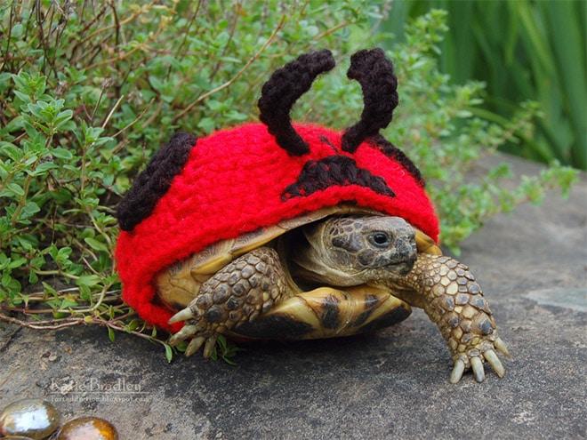 Какая милота! 12 весёлых фотографий черепах в вязаных костюмах...) рис 8