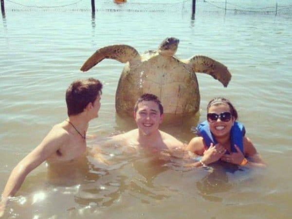 трое в воде и черепаха на заднем плане