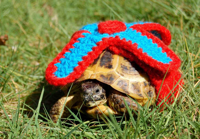черепаха в милом костюме