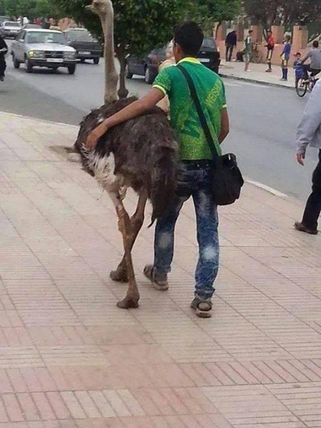 парень идет в обнимку со страусом