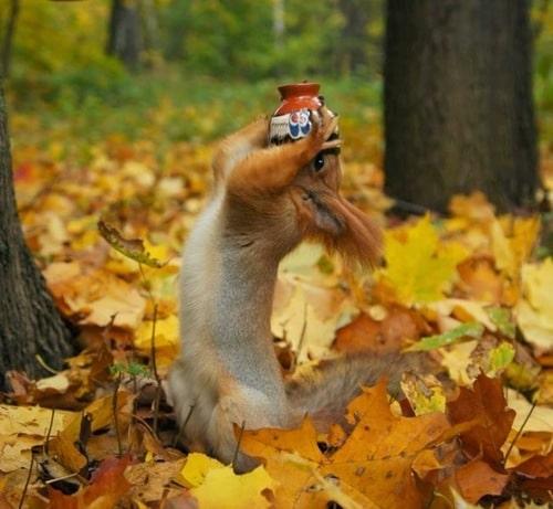 белка пьет из чашки листья осень