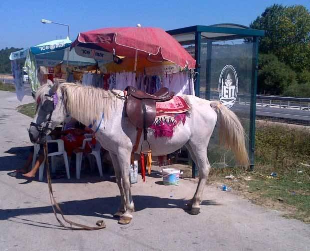 белая лошадь на остановке