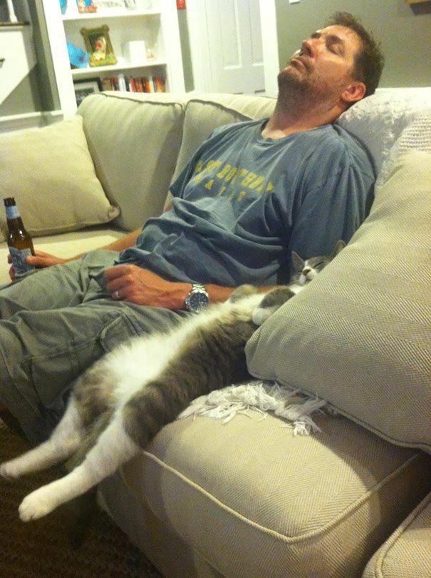10 фото, которые доказывают, что кошки - самые смешные существа на Земле! Часть 2