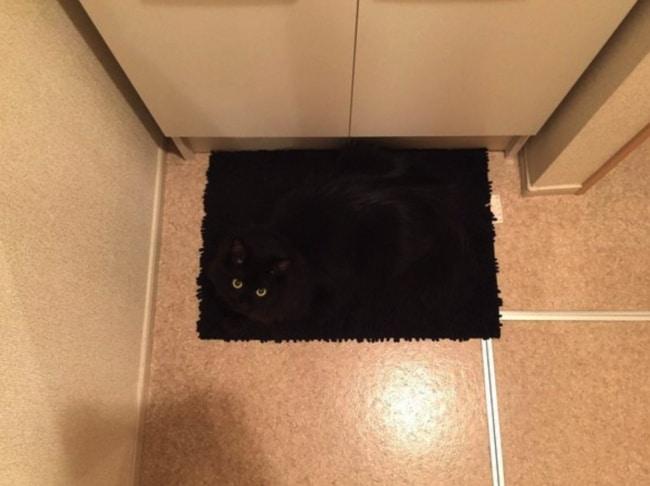 черный кот на черной дорожке