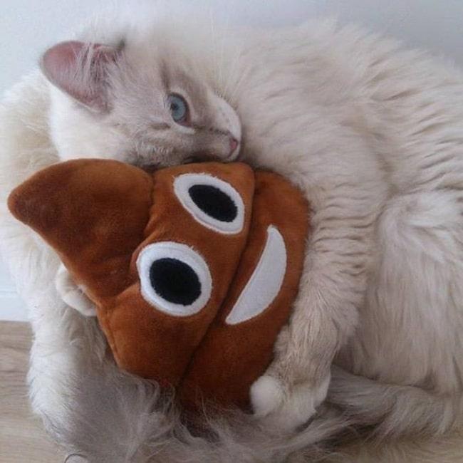 белый кот в обнимку с игрушкой