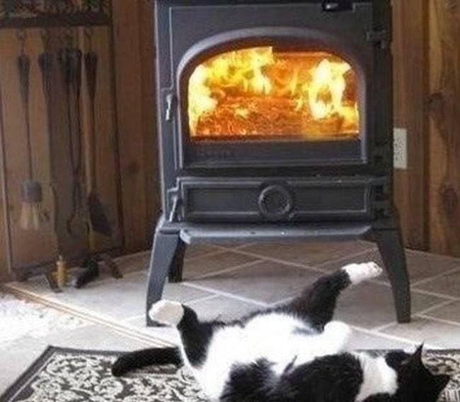 черно-белый кот лежит перед камином