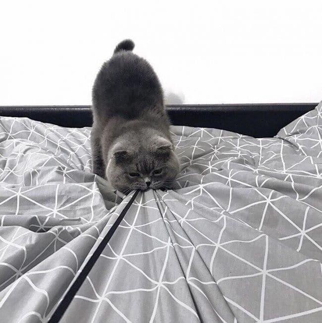 серый кот на кровати