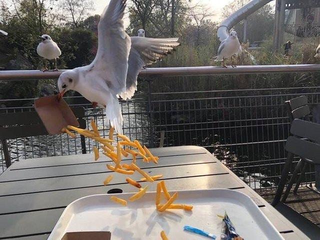 чайка съела еду