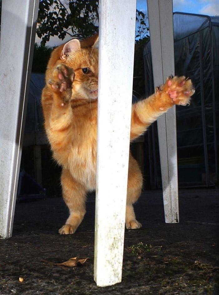 рыжий кот рис 3