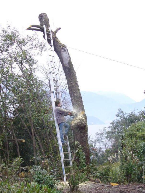 мужчина на лестнице пилит дерево
