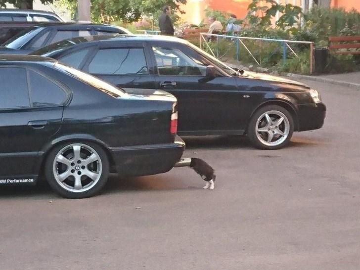10 фото, которые доказывают, что кошки - самые смешные существа на Земле! Часть 2 рис 4