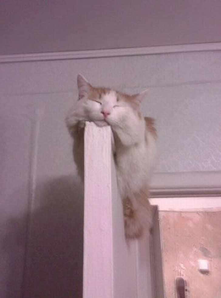 кот спит на двери