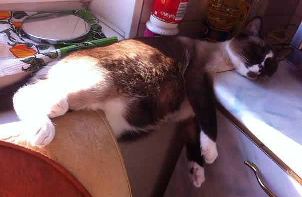 10 фото, которые доказывают, что кошки - самые смешные существа на Земле! Часть 2 рис 2